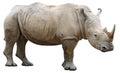 Rhinoceros isolated on white Stock Photo