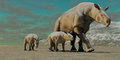 Rhinoceros like paraceratherium mother two twin calves walks along stony desert oilgocene era Stock Image