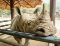 Rhinoceros rhino is resentful but hidden animals which are cute Stock Photos
