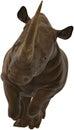 Rhinoceros, Rhino, Wildlife, Isolated, Charging