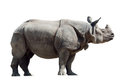Rhinoceros unicornis Royalty Free Stock Photos