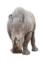 Rhinoceros on white with clipping path Stock Images
