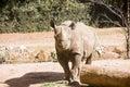 Rhinocerous by Log Royalty Free Stock Photo