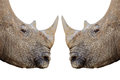 Rhinos. Royalty Free Stock Photos