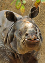 Rhinosaurus armored asian rhino close up portrait Royalty Free Stock Images
