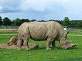 Rhinosaurus in the saphari park Stock Photos