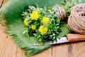 Rhodiola rosea on the board flowers tied with string ball of twine a knife a green napkin a background of wooden boards Stock Image