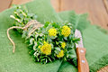 Rhodiola rosea on the board with a knife flowers tied twine green napkin background of wooden boards Royalty Free Stock Image
