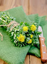 Rhodiola rosea on the green napkin flowers tied with string with a knife a a background of wooden boards Stock Images