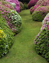 Rhododendron and azaleas with lawn Royalty Free Stock Images