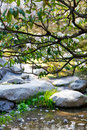 Rhododendron  in Japanese garden during summer Royalty Free Stock Photo