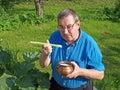 Rhubarb elderly man in garden eat with sugar Stock Photography