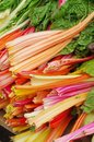Rhubarb fresh sold at the market Stock Image
