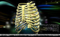 Rib cage digital illustration of in colour background Royalty Free Stock Images