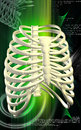Rib cage digital illustration of in colour background Stock Photos
