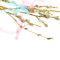 Ribbon and spring pussy willow twigs on white background Royalty Free Stock Photography