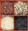 Rice collection Royalty Free Stock Photography