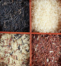Rice collection Royalty Free Stock Images