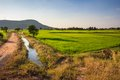 Rice farm with soil road and water way in countryside of thailand Royalty Free Stock Photo
