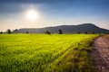 Rice farm and sunlight in countryside of thailand Royalty Free Stock Photos