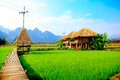 Rice field beautiful views with house Royalty Free Stock Images