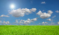 Rice field blue sky and sunny beautiful Stock Photography