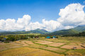 Rice field in country side of thailand Stock Images