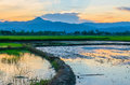 Rice field fill with water Stock Photos