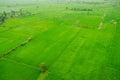 Rice field green grass blue sky cloud cloudy landscape backgroun