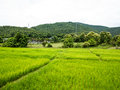 Rice field and hills plantation chiang mai thailand Stock Photos