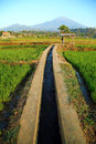 Rice field irrigation Stock Images