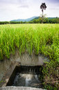Rice field irrigation, Thailand. Stock Image