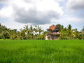 Rice field with an old house palm trees traditonal and cloudy sky in the background location ubud bali indonesia Stock Photo