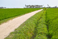 Rice field and road the pathway in Stock Images