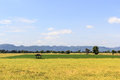 Rice field with shack on mountain background Stock Photography