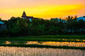 Rice field on sunset. Bali, Indonesia. Royalty Free Stock Photo