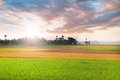 Rice field at sunset colorful filed Stock Photos