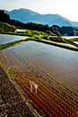 Rice field terrace in Kyushu Japan Royalty Free Stock Photo