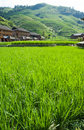 Rice field terraces the china in western Stock Image