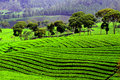 Rice field terraces in Indonesia Royalty Free Stock Photo