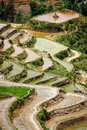 Rice field terraces. Near Sapa, Vietnam Stock Photos