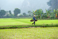 Rice field in Vietnam. Ninh Binh rice paddy Royalty Free Stock Photo