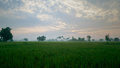 Rice fields in the morning and fog Stock Photos