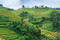 Rice fields with mountains and clouds in mu cang chai vietnam Stock Images