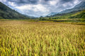 Rice fields from sapa valley north vietnam Stock Photography