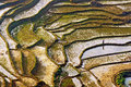 Rice Fields Sapa, Vietnam Royalty Free Stock Photography