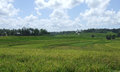 Rice fields in south sulawesi green indonesia Stock Photo