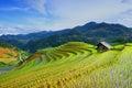 Rice fields on terrace in rainy season at Mu Cang Chai, Yen Bai, Vietnam. Royalty Free Stock Photo