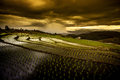 Rice fields on terraced. Royalty Free Stock Photo
