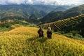 Rice fields on terraced of Mu Cang Chai, YenBai, Vietnam. Royalty Free Stock Photo